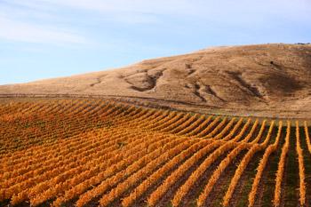wines_slidinghill_vineyard.jpg