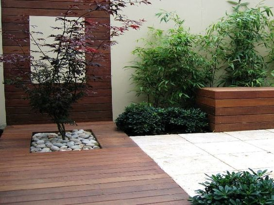 An Acer provides a eye catching feature in a modern courtyard.