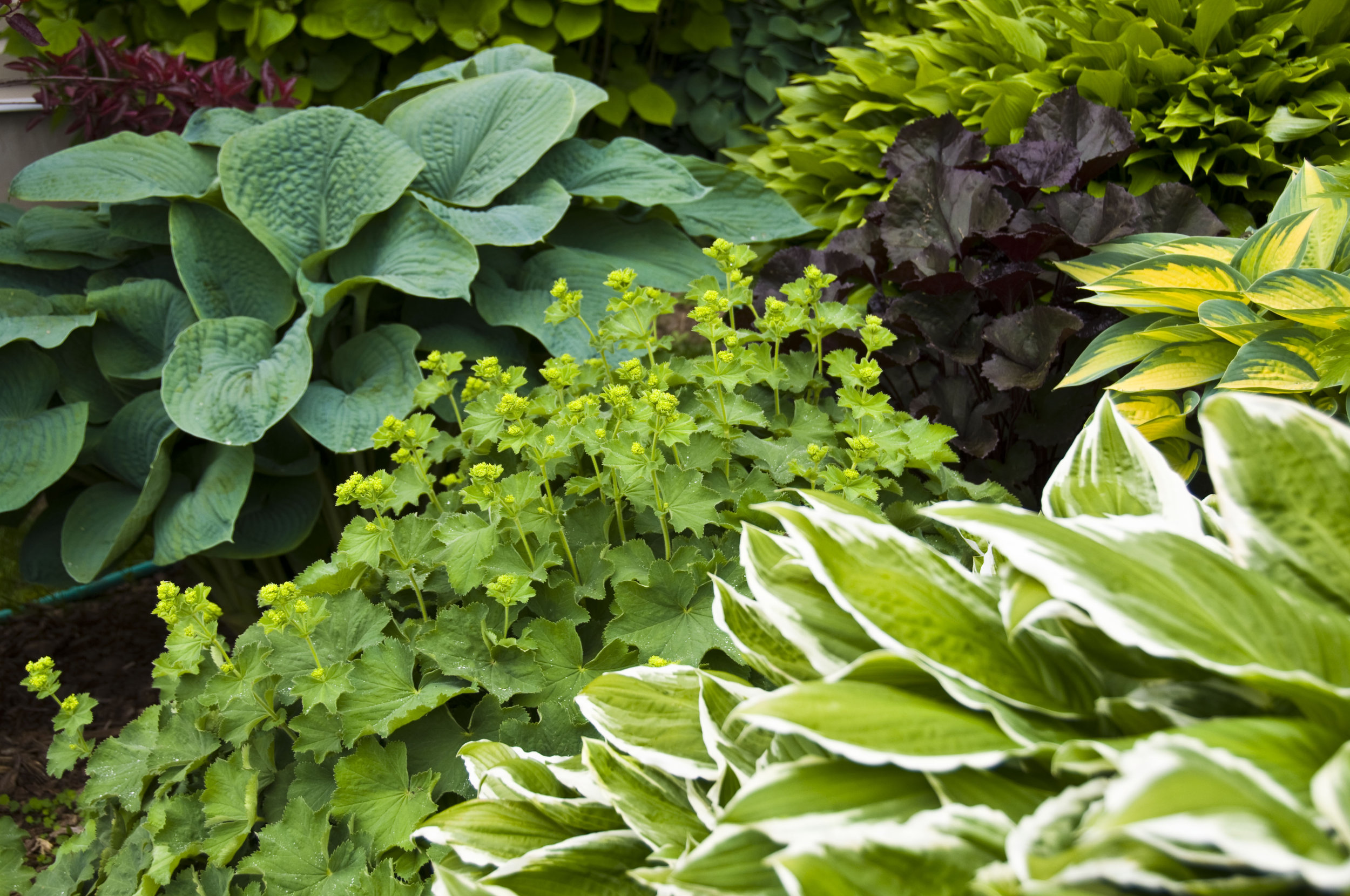 Read the new post on planting ideas for a shady garden here.  Thanks for reading!     http://haleandaltrinchamlife.co.uk/2017/04/gardening-supplement-planting-shade/