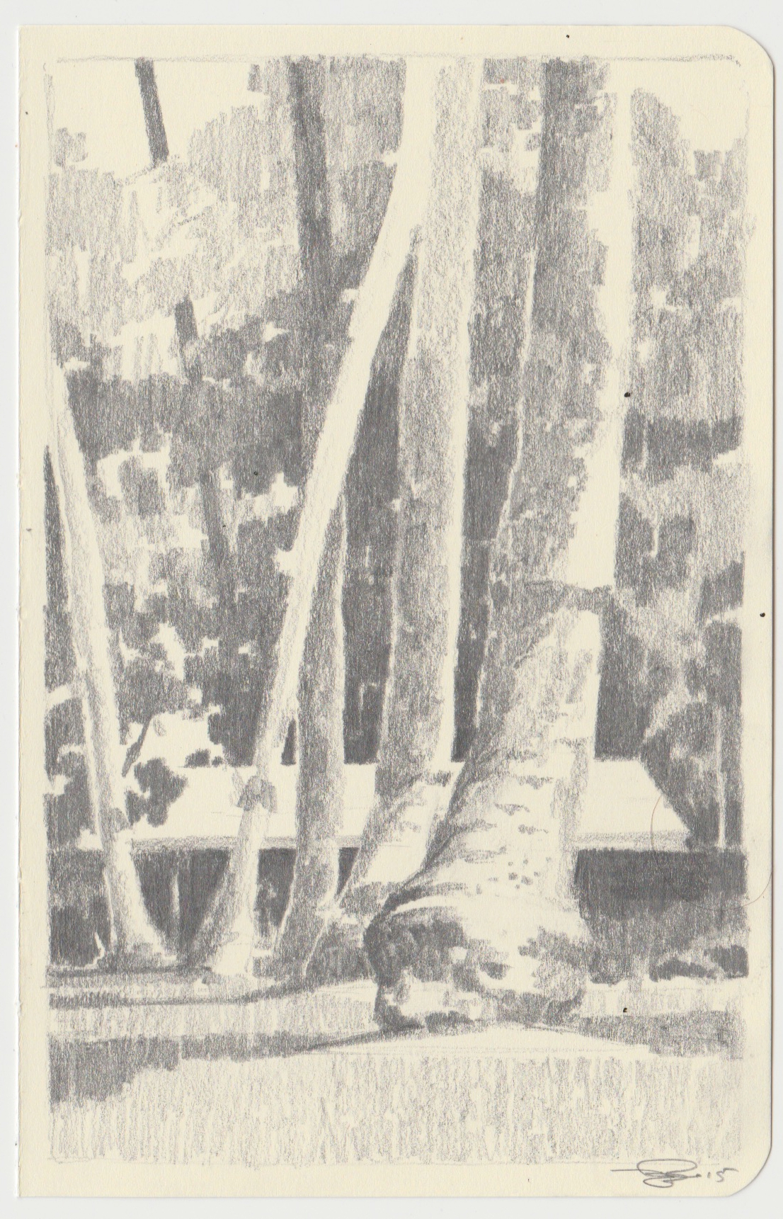 Trees   -  $200  - Pencil on Paper, 3.5'' x 5.5'' UNFRAMED.