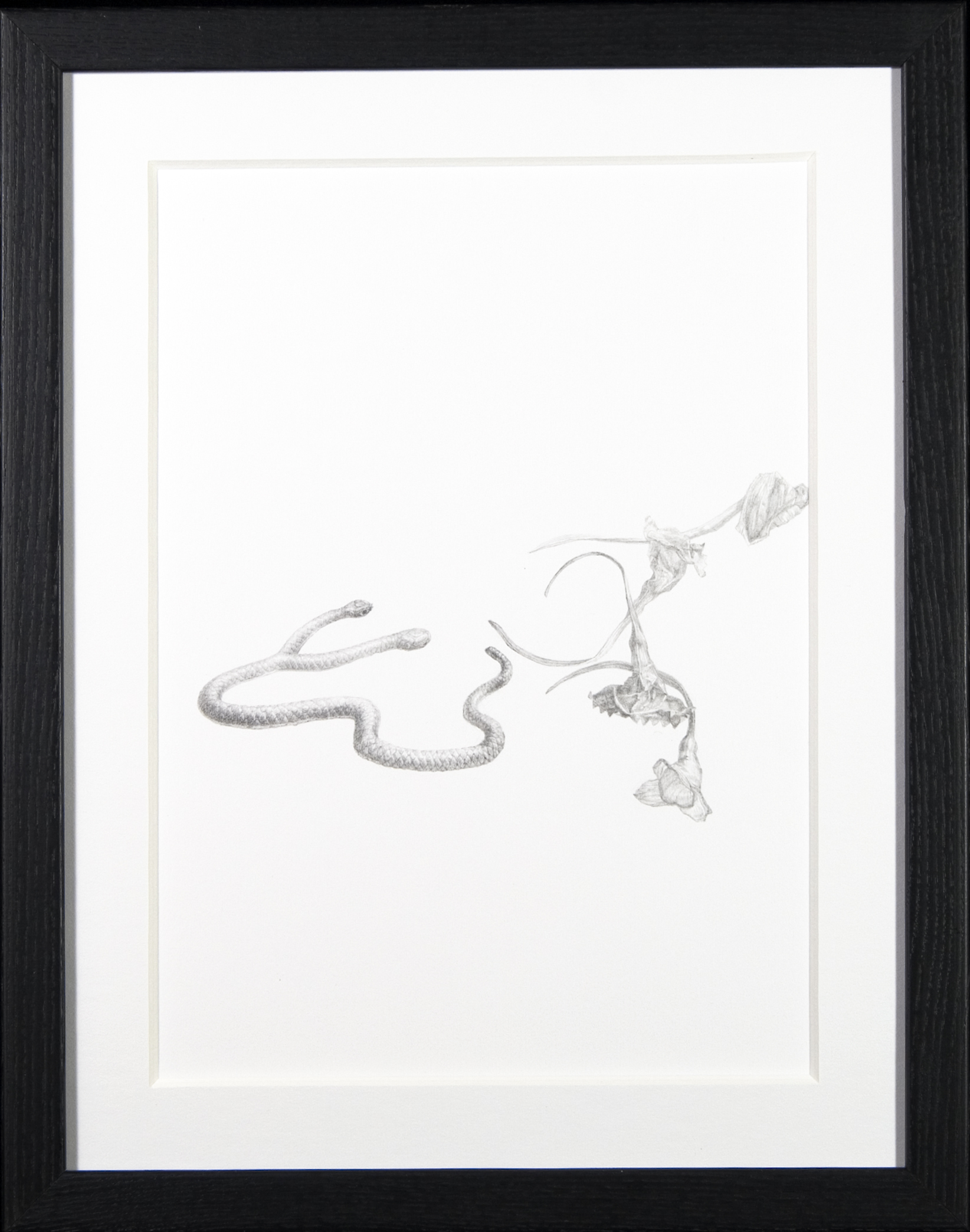 At Loose Ends  -  $250  - Pencil on Paper, 11'' x 14'' , FRAMED.