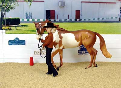 OJF Holy Ghost - 2004 MEPSA OF Performance Showmanship Champion