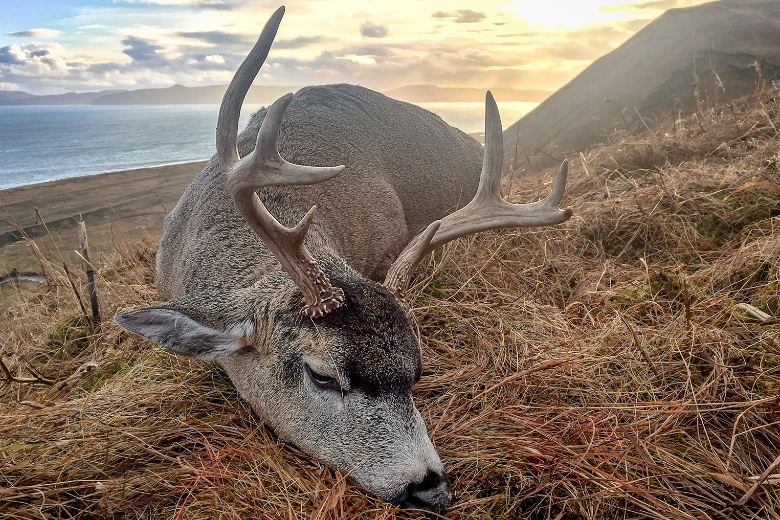 Sitka Buck with Sunset Small.jpg
