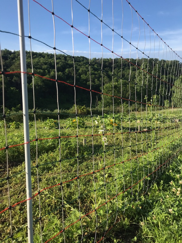 The electric net fence
