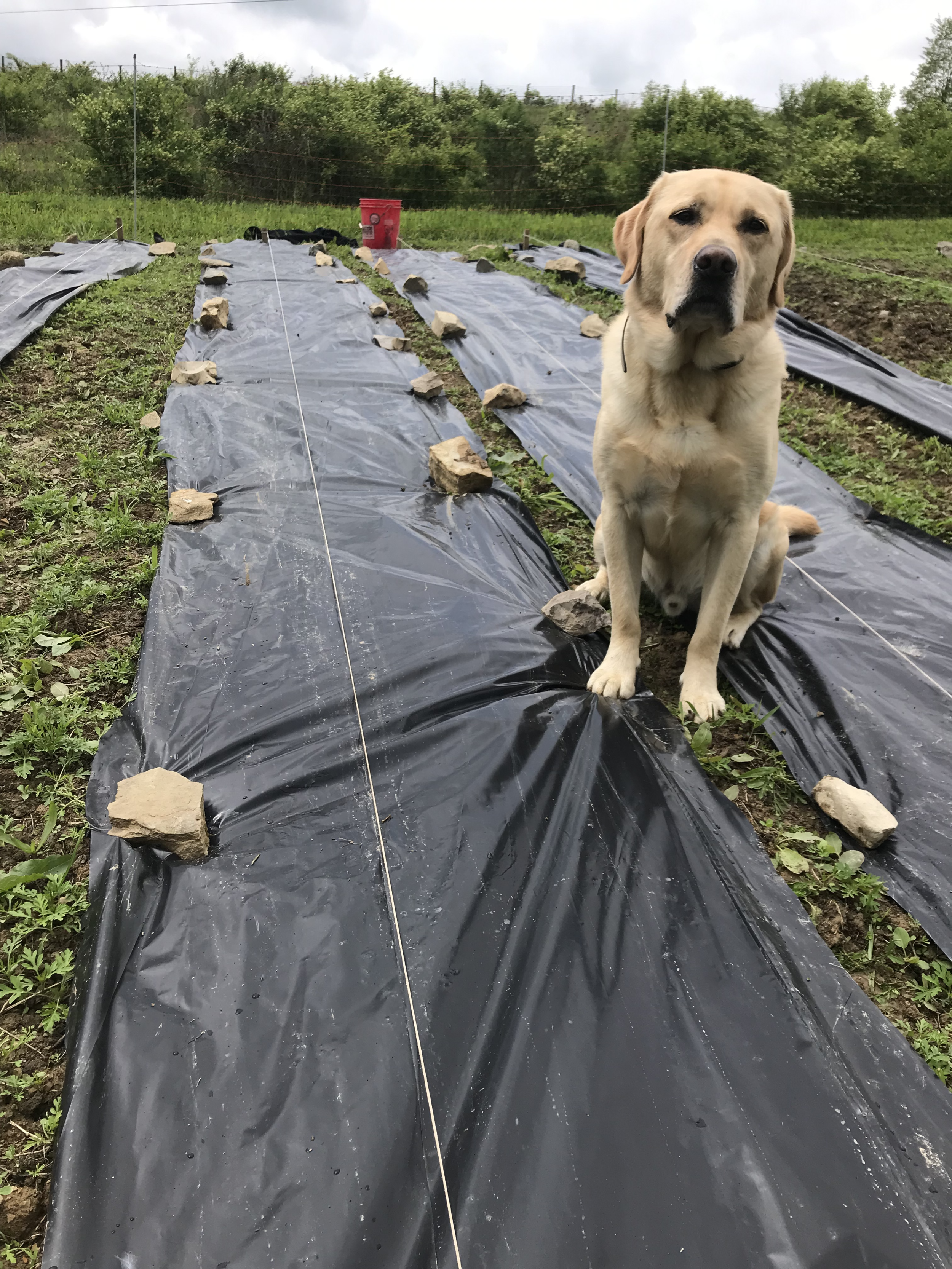 Merle helping in the garden