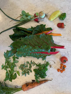 The daily StHealthy Garden harvest