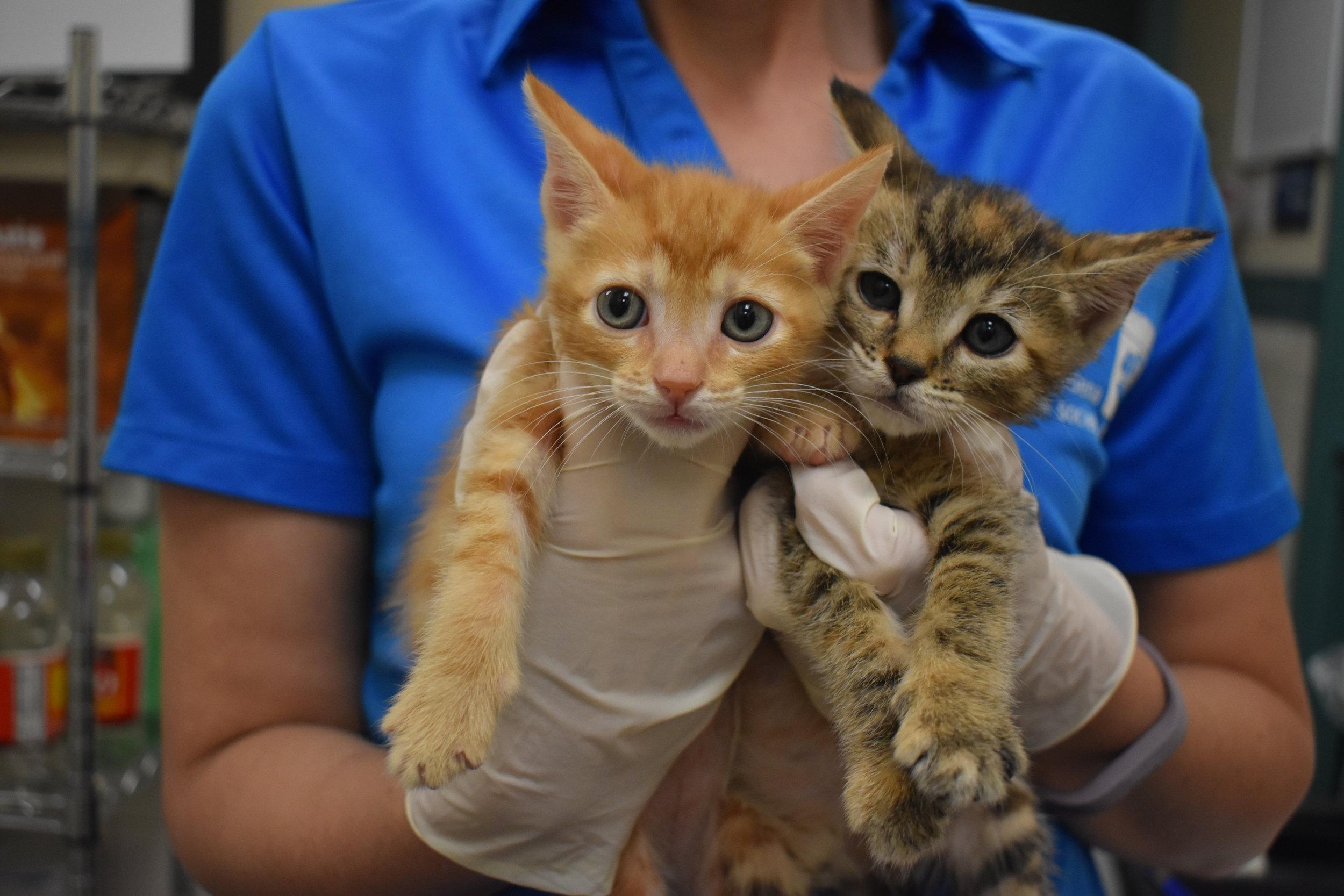 Foster Kittens.JPG