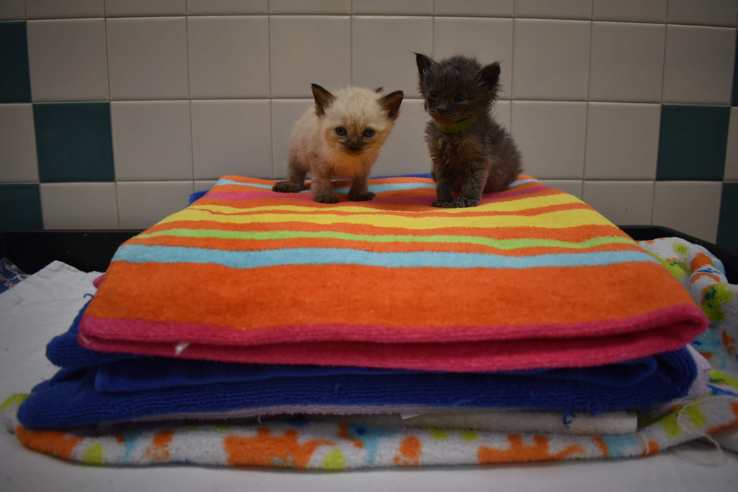 Towel kittens.JPG