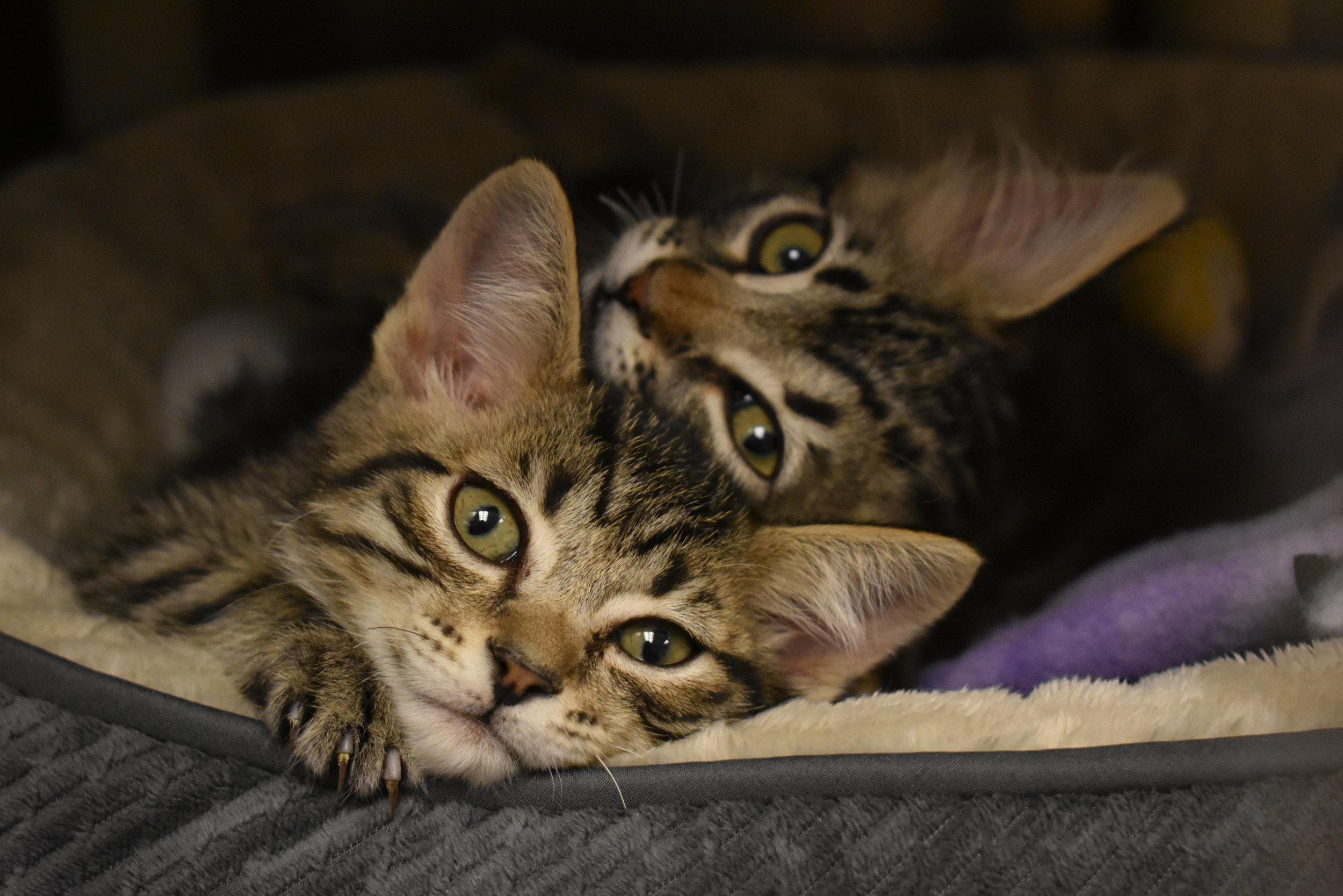2 cute kittens 2.JPG