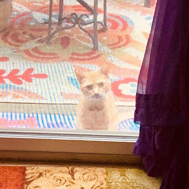 #neighborscat needs yumms. #ivegotthis #lobster #breakfast #lovecats #love