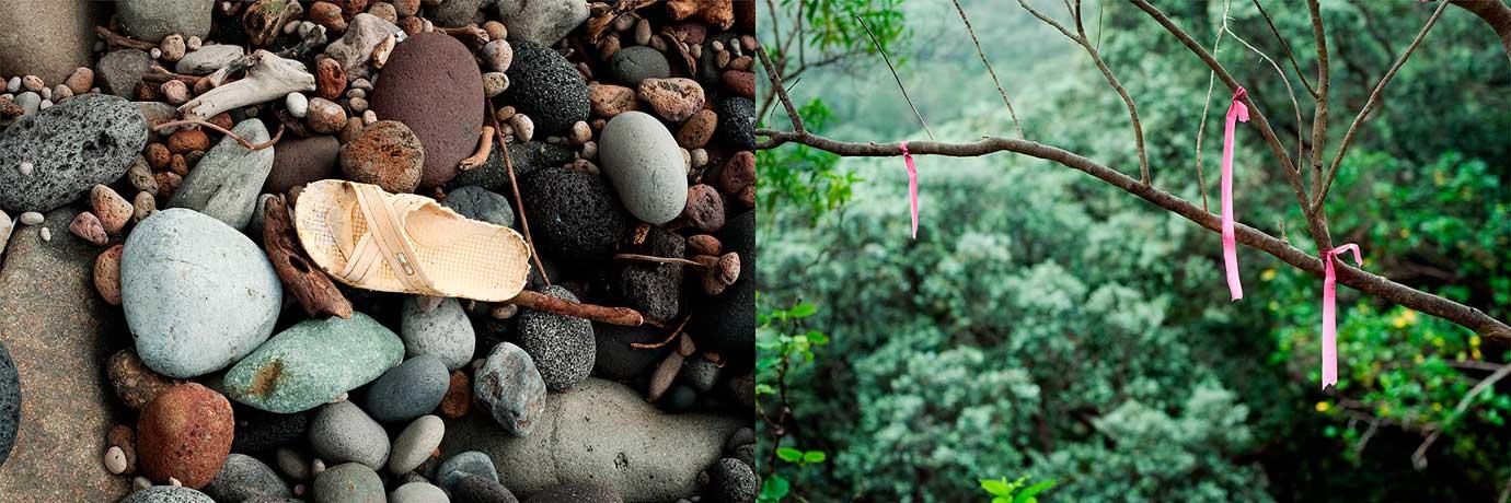 invasive-species-03_2011_BruceFoster.jpg