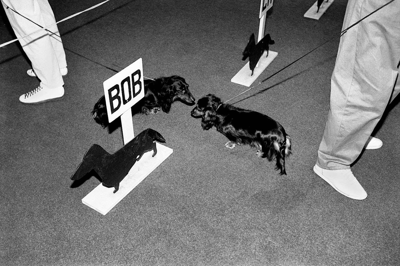 Best of Breed, Canterbury, 1991, Bruce Foster, NZ