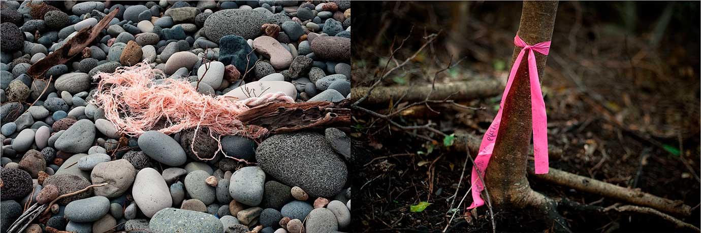 Invasive Species 04 Raoul Island Kermadecs NZ Bruce Foster