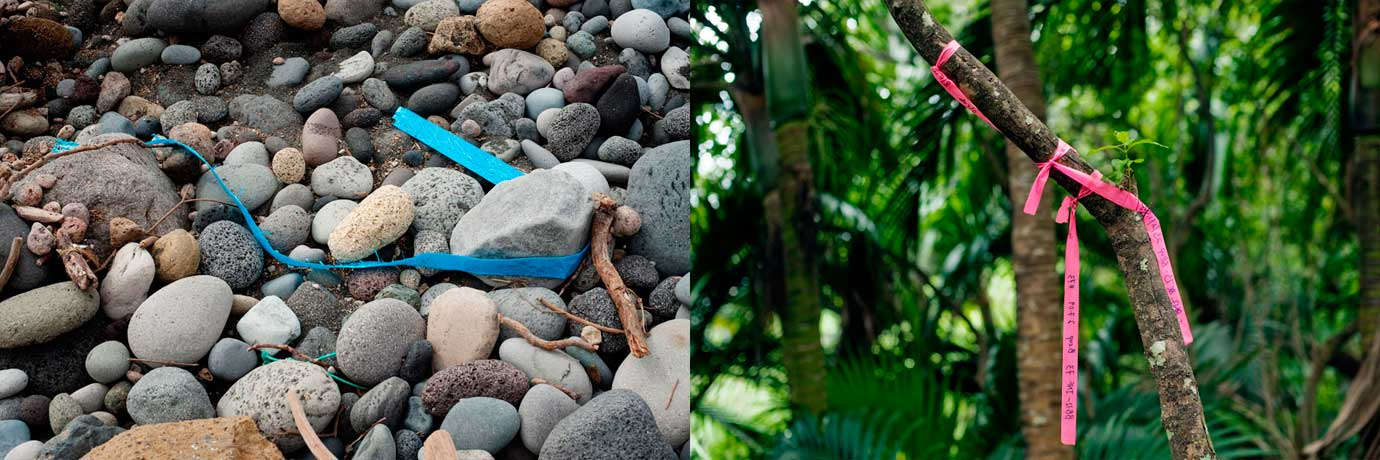 Invasive Species 07 Raoul Island Kermadecs NZ Bruce Foster