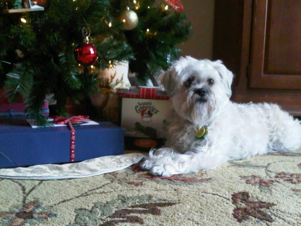 Millie Christmas Tree.jpg