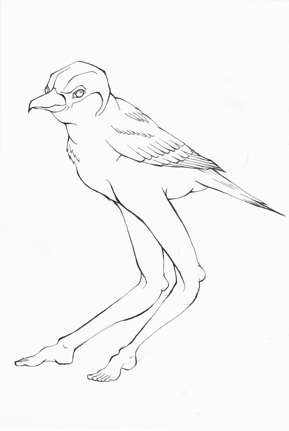 BirdLegs.jpg