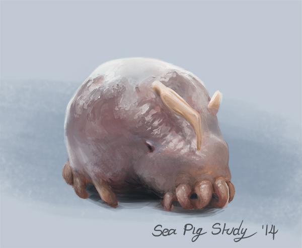 Sea Pig Study.jpg