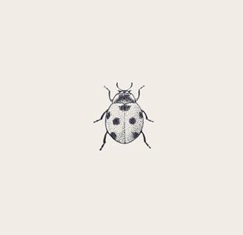 ladybug-12-amazing-macro-photography-of-insects-macro-style-hd.jpg