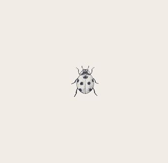 ladybird_macro_2-wallpaper-2048x1152.jpg