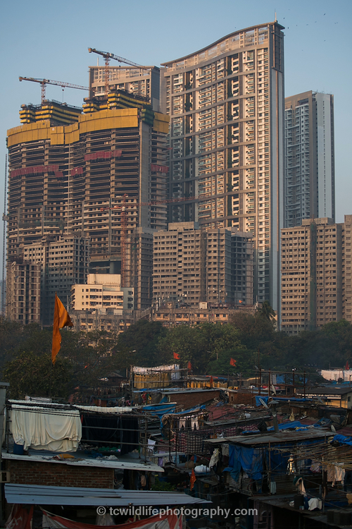 For me, this image shows the problem with modern day India. Money is being invested in new skyscrapers, but people below struggle to exist in small shacks and sheds. I remember thinking, what hope is there for wildlife, if we can't even take care of our own kind?