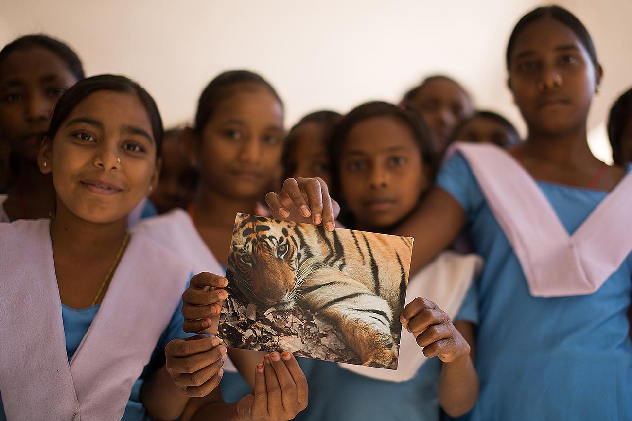 My original shot of the sub adult tiger at a School near Bandhavgarh Tiger Reserve