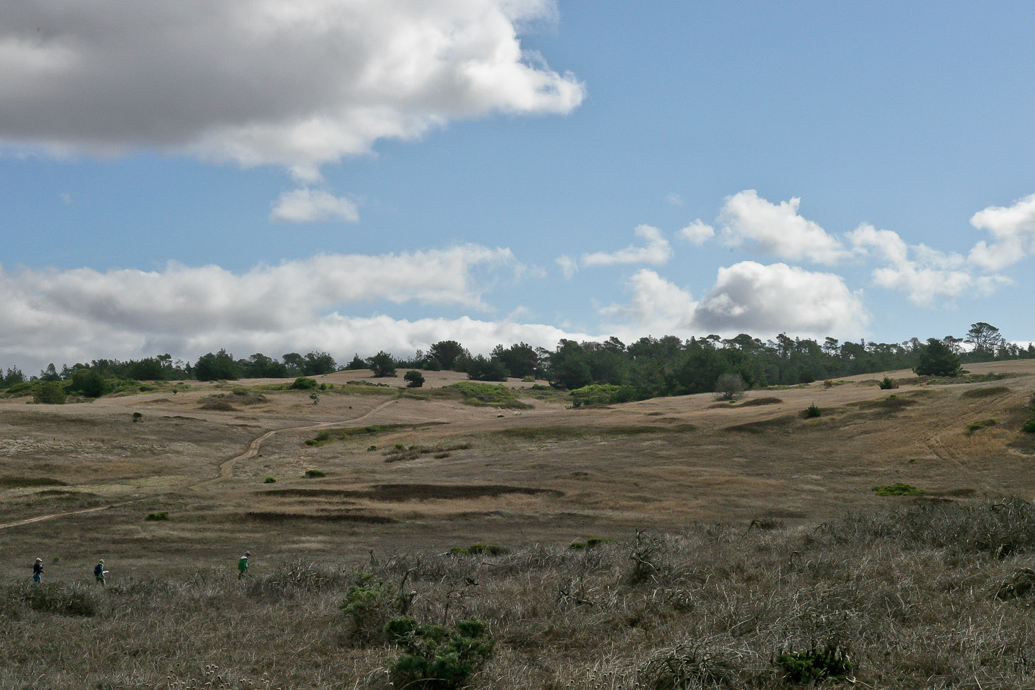 fiscalini-ranch-cambria-california-11