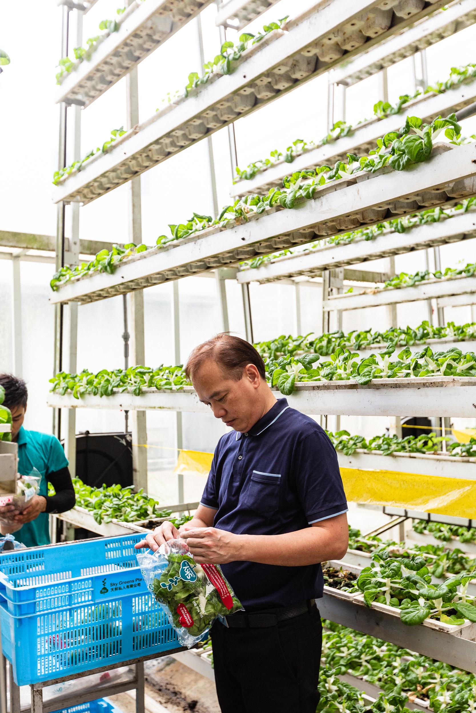 singapore-commercial-editorial-photographer-zainal-zainal-vertical-farming-skygreens-pictet-02.jpg