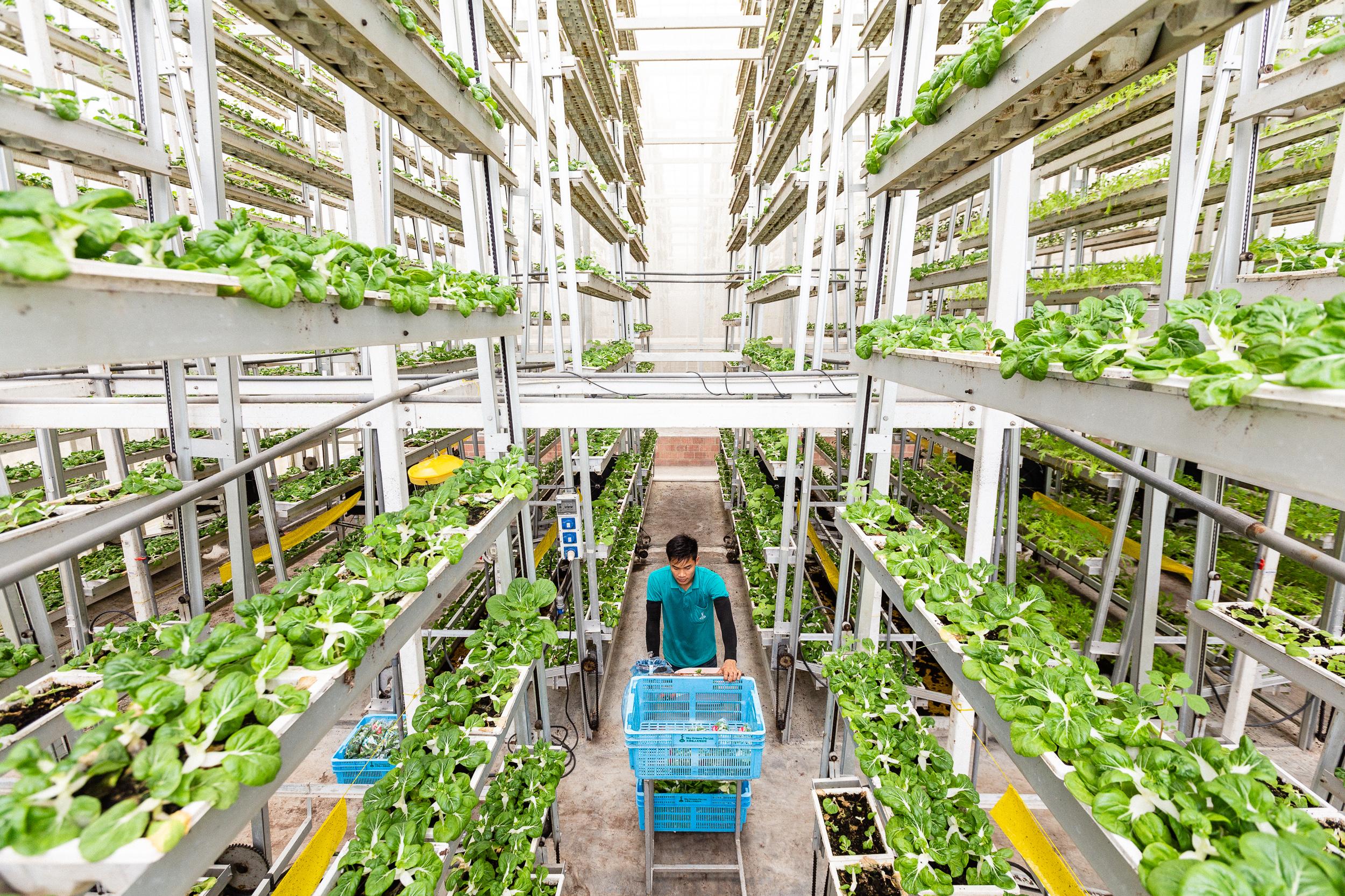 singapore-commercial-editorial-photographer-zainal-zainal-vertical-farming-skygreens-pictet-03.jpg