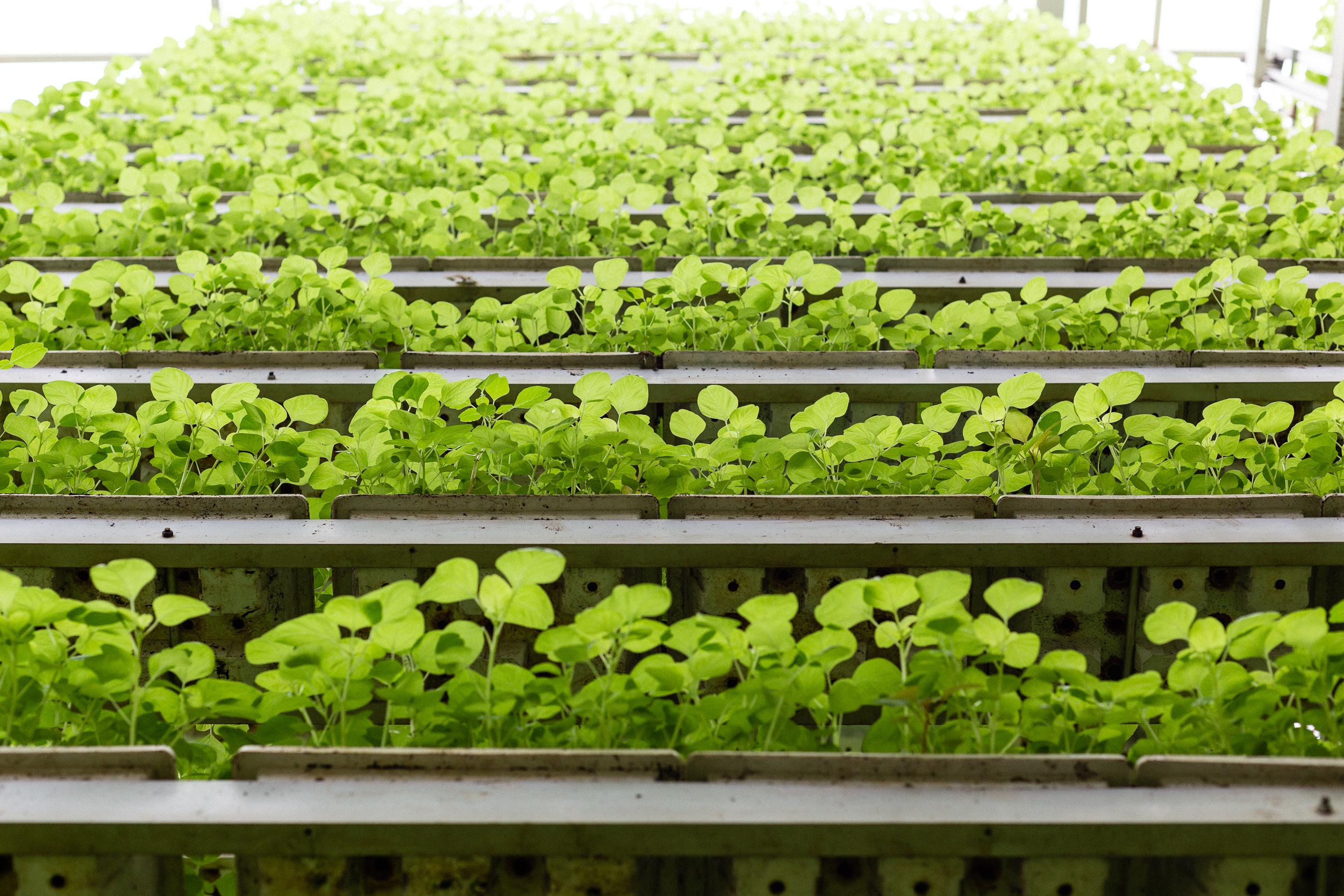 singapore-commercial-editorial-photographer-zainal-zainal-vertical-farming-skygreens-pictet-07.jpg