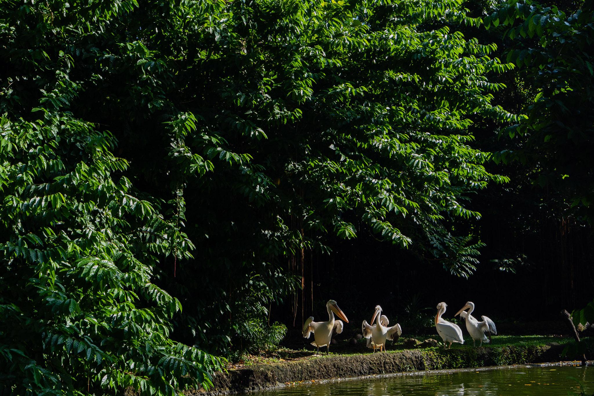 viator-singapore-photographer-tourism-tours-zoo-little-india-gardens-marina-bay-007.jpg