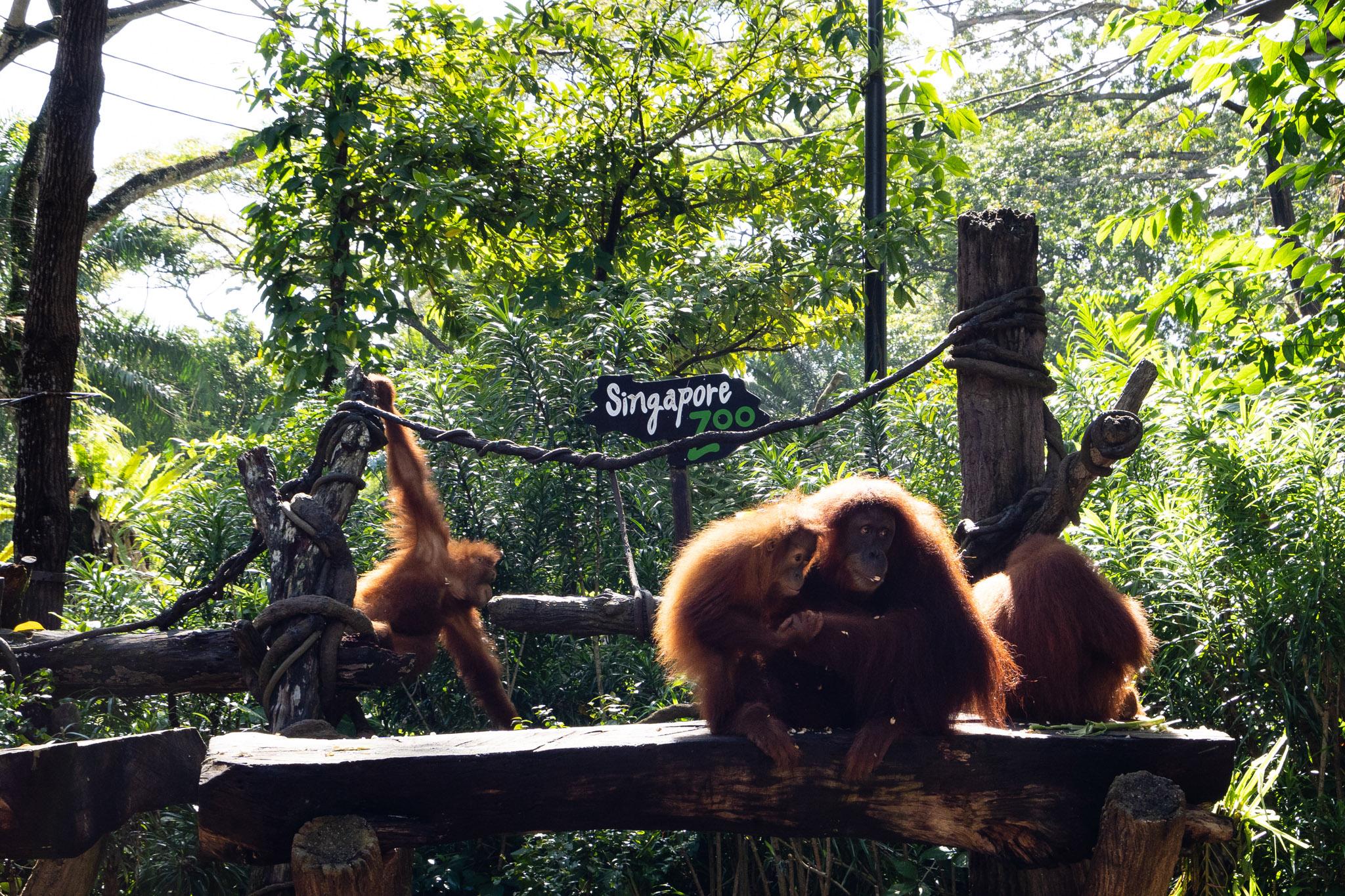 viator-singapore-photographer-tourism-tours-zoo-little-india-gardens-marina-bay-008.jpg