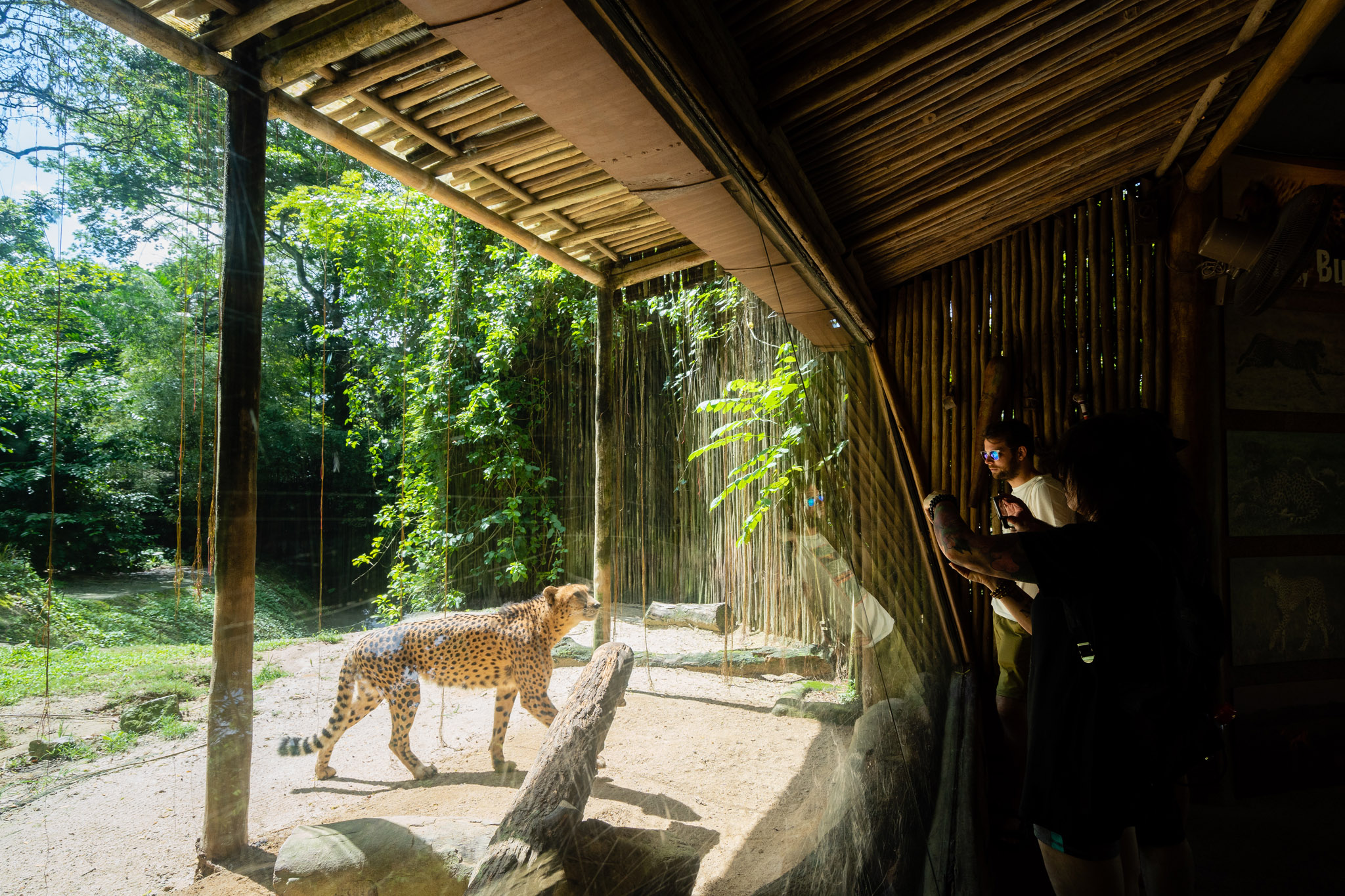 viator-singapore-photographer-tourism-tours-zoo-little-india-gardens-marina-bay-009.jpg