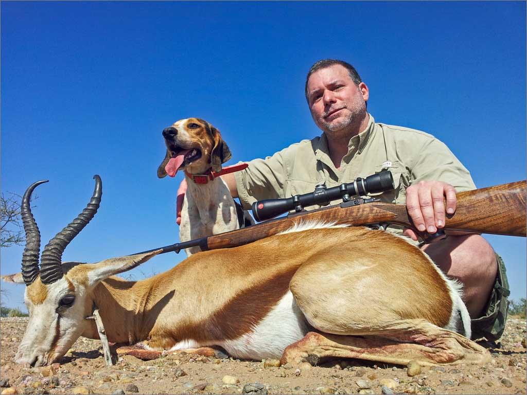 Springbok (Antidorcas marsupialis)