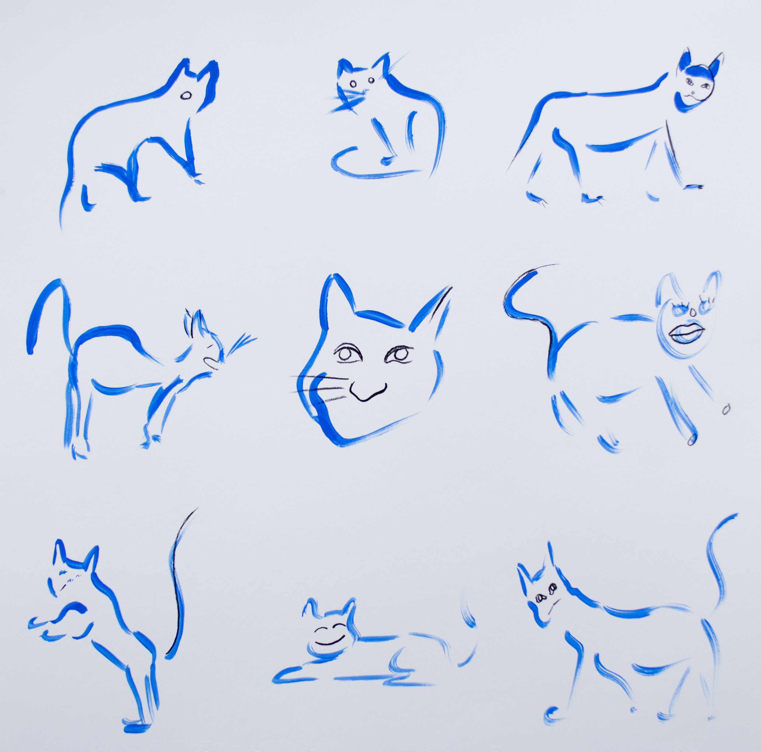 Cat Exercise Chart