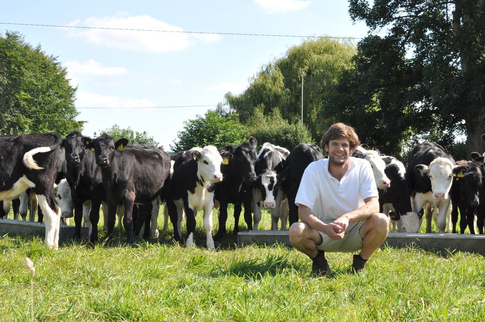 Harry+Street+and+Cows.jpg