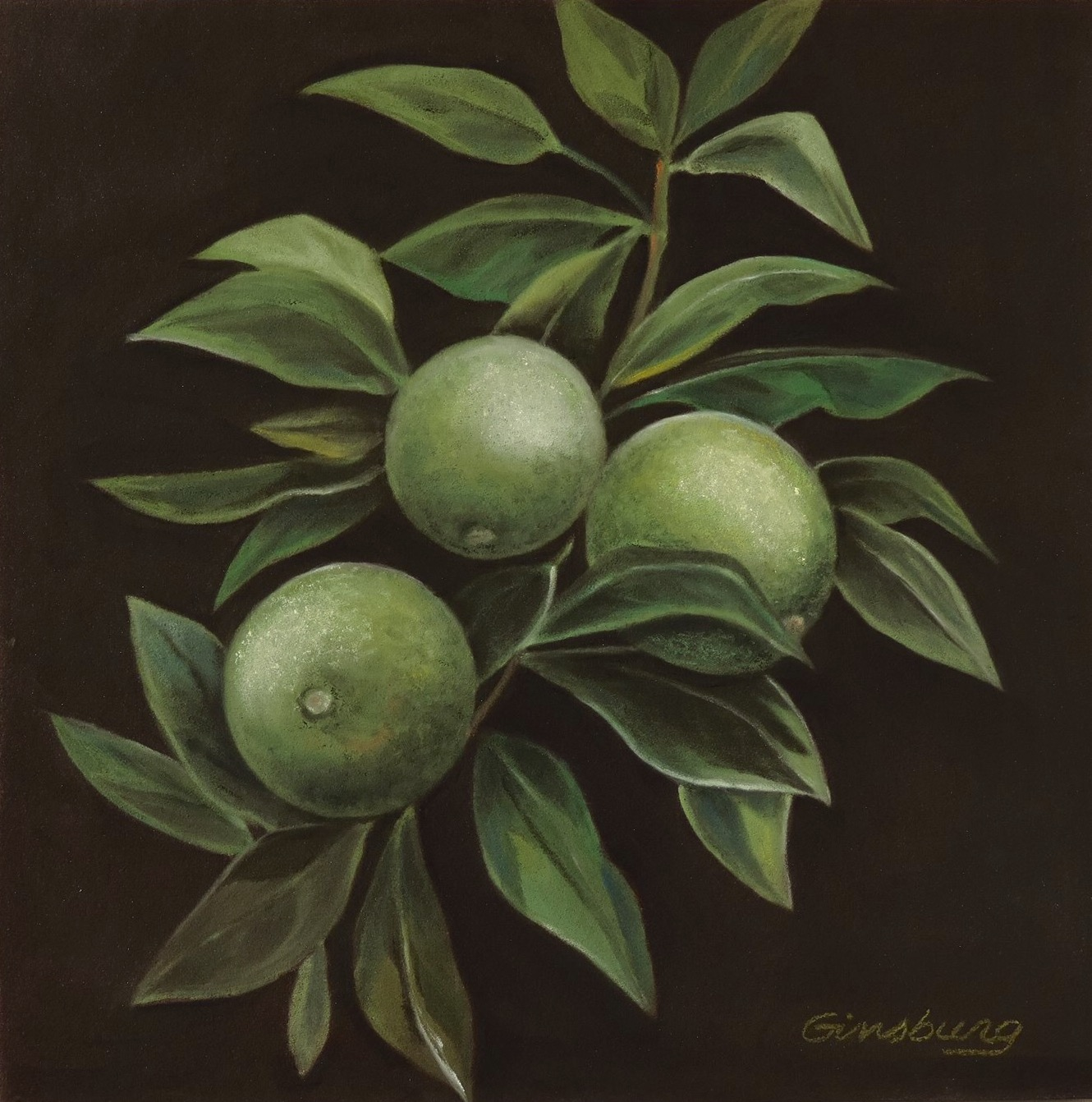 """""""branch of the lime""""  PanPastel® Cheri GInsburg ©"""