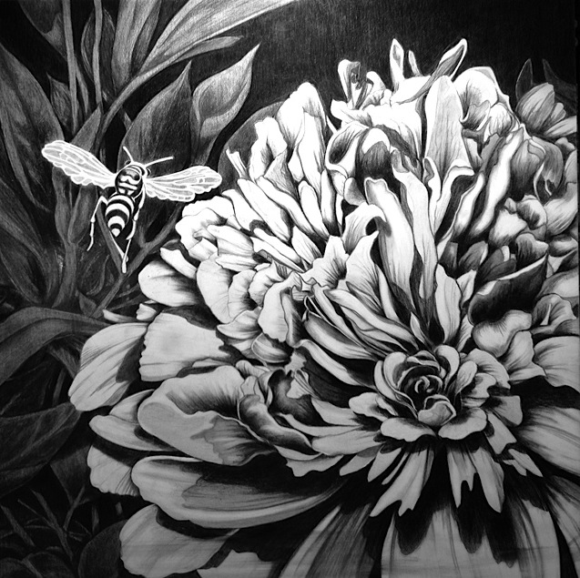 """""""the bee and the peony""""  Graphite Cheri GInsburg ©  PRIVATE COLLECTION"""