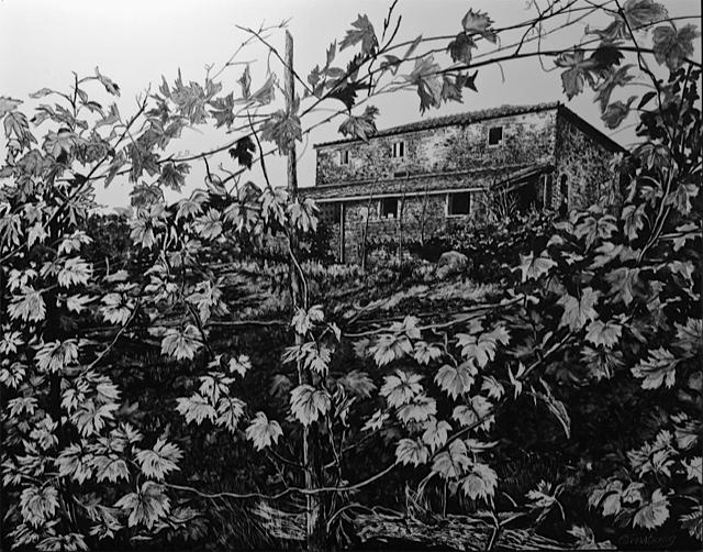 """view from the vineyard"", dievole, near Vagliogli, italy  Pen and Ink Cheri GInsburg ©"