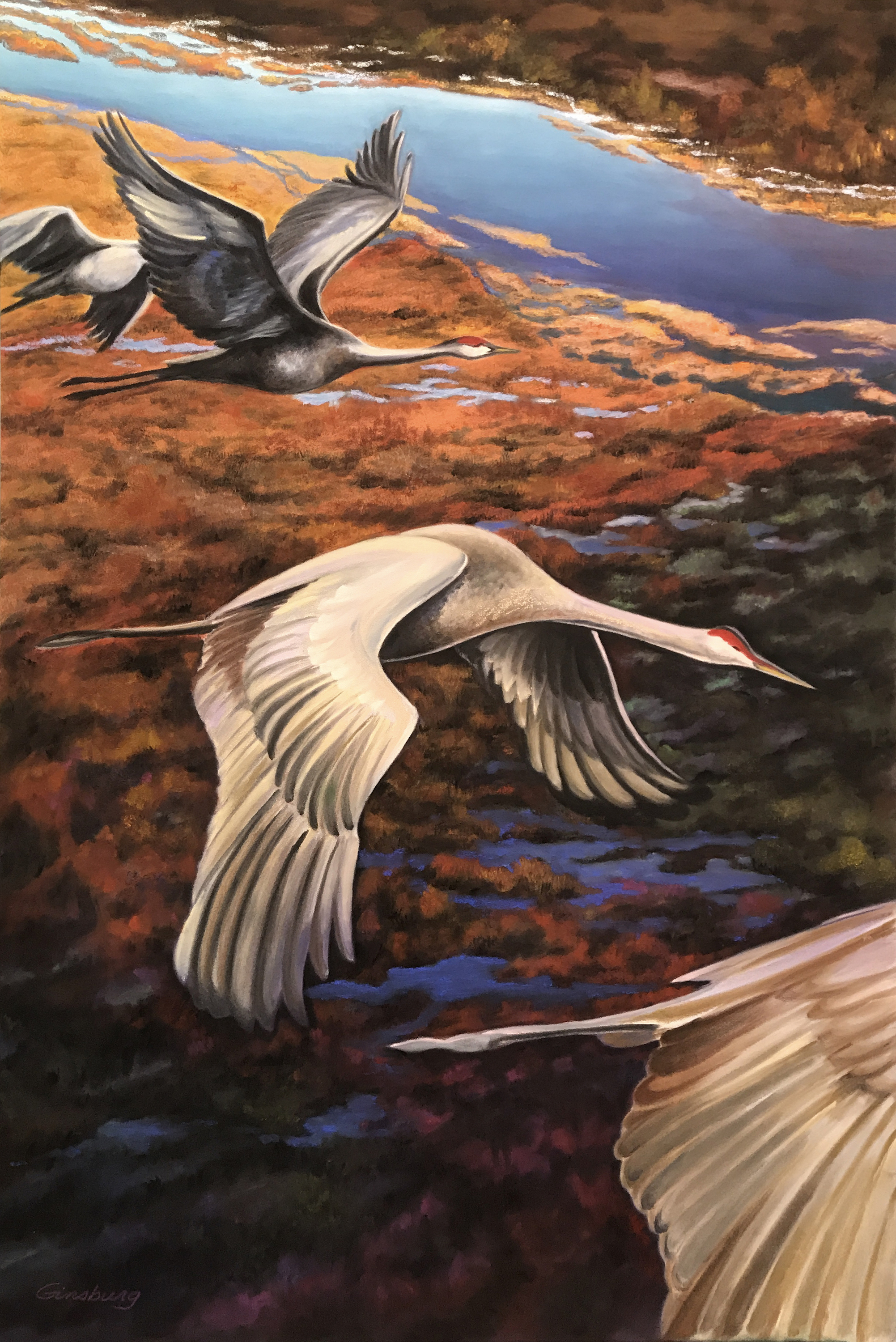 """""""WINGS OVER THE PLATTE""""  PanPastel©  24"""" x 36""""  Cheri Ginsburg©  Juried selection """"Wings Over The Platte"""" Exhibition, Stuhr Museum, Grand Island, NE 2018"""