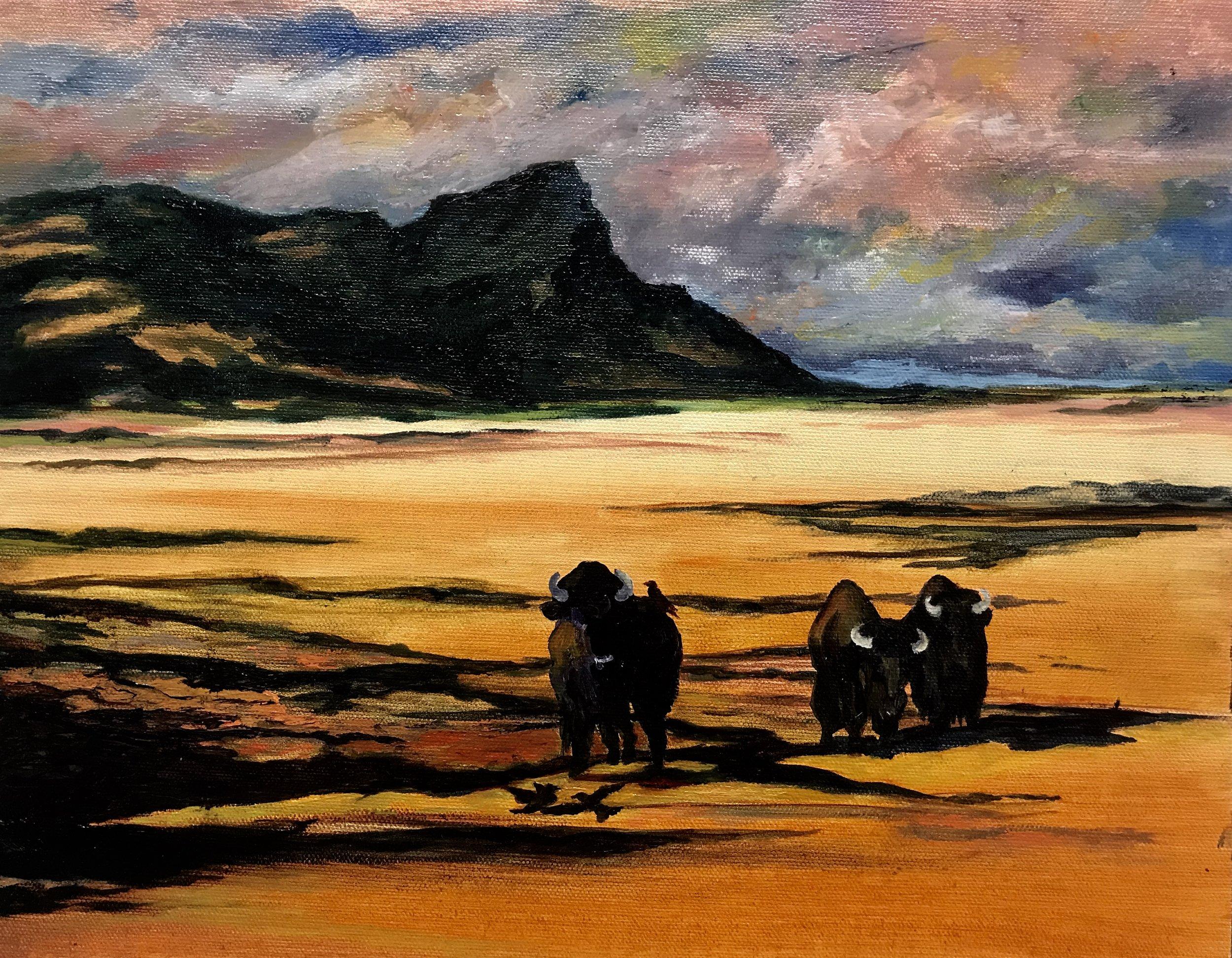 AMERICAN BISON  11 X 14  Oil on canvas  Cheri GInsburg ©