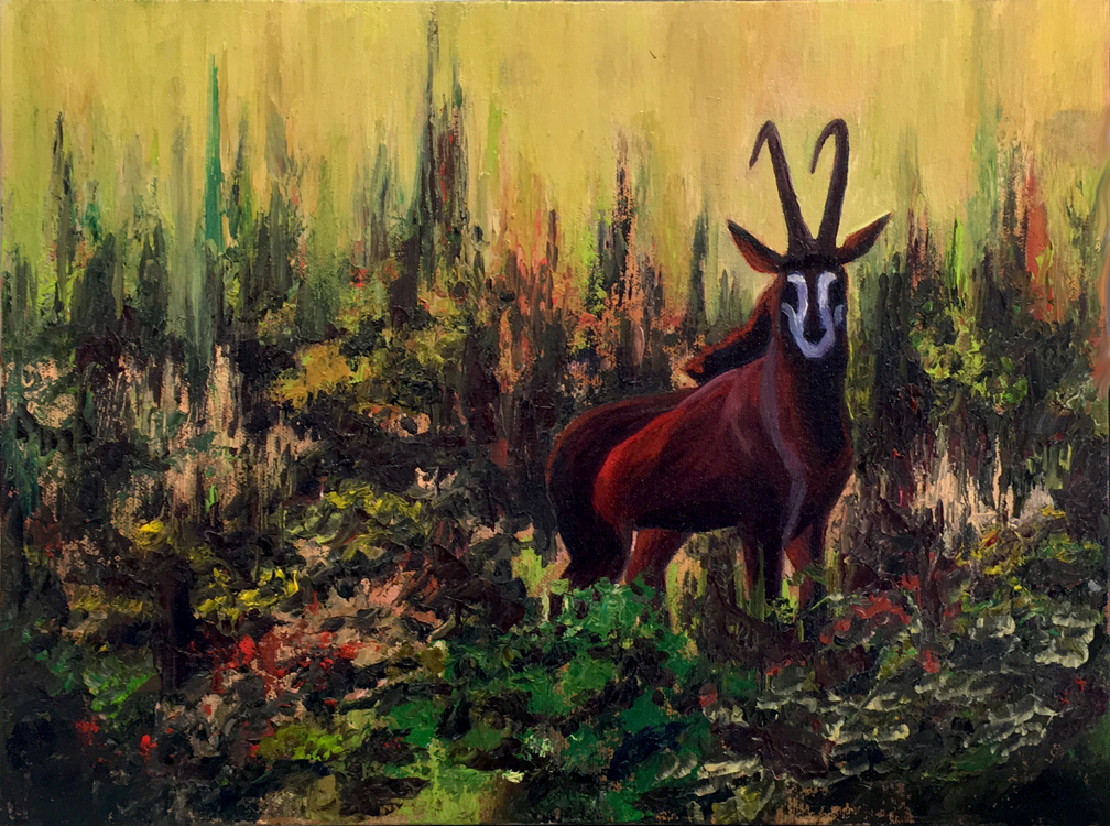 African Sable  South Africa  11 x 14  Oil on Canvas  Cheri GInsburg ©