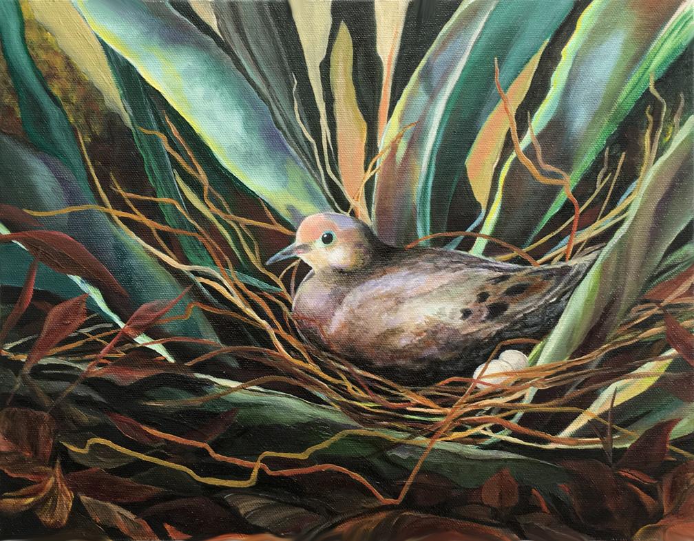 Mourning Dove  Plein Air, completed en studio  Tucson, AZ  11 x 14  Oil on canvas  Cheri GInsburg ©