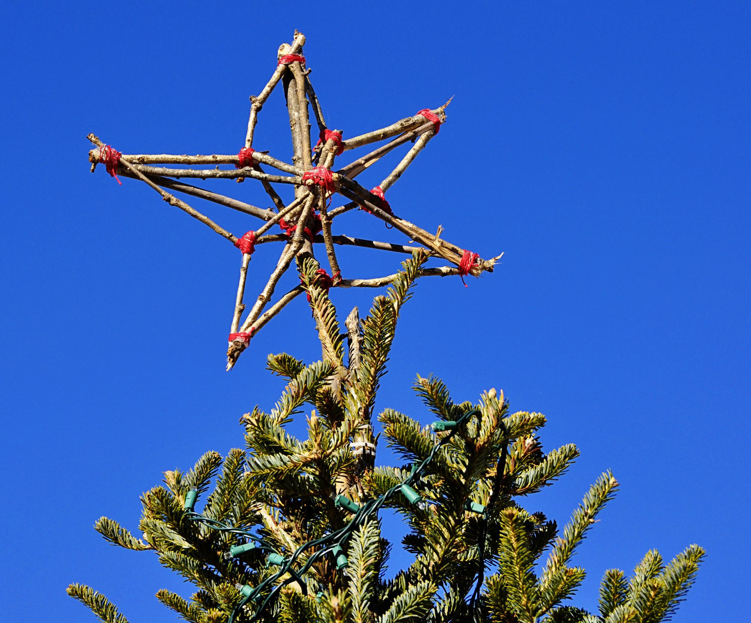 Treetop4.jpg