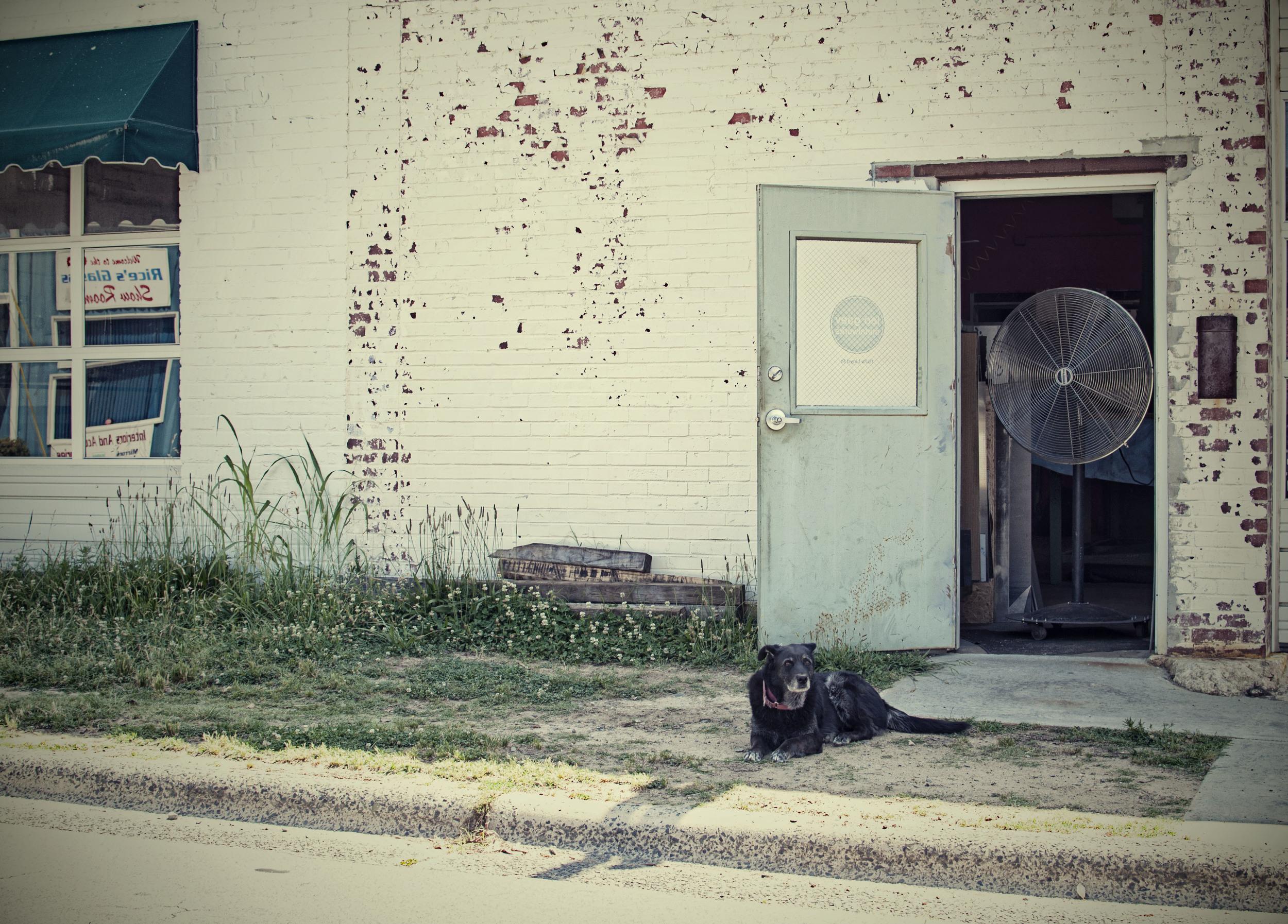 Black dog Lloyd.jpg