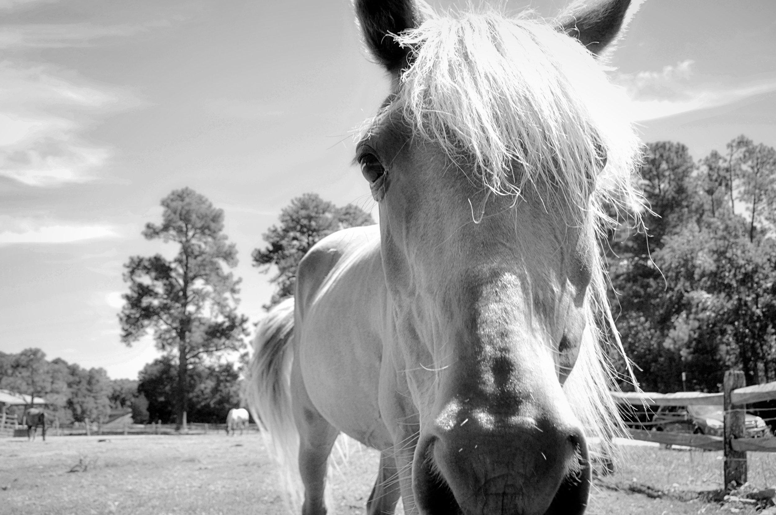 horsish now.jpg