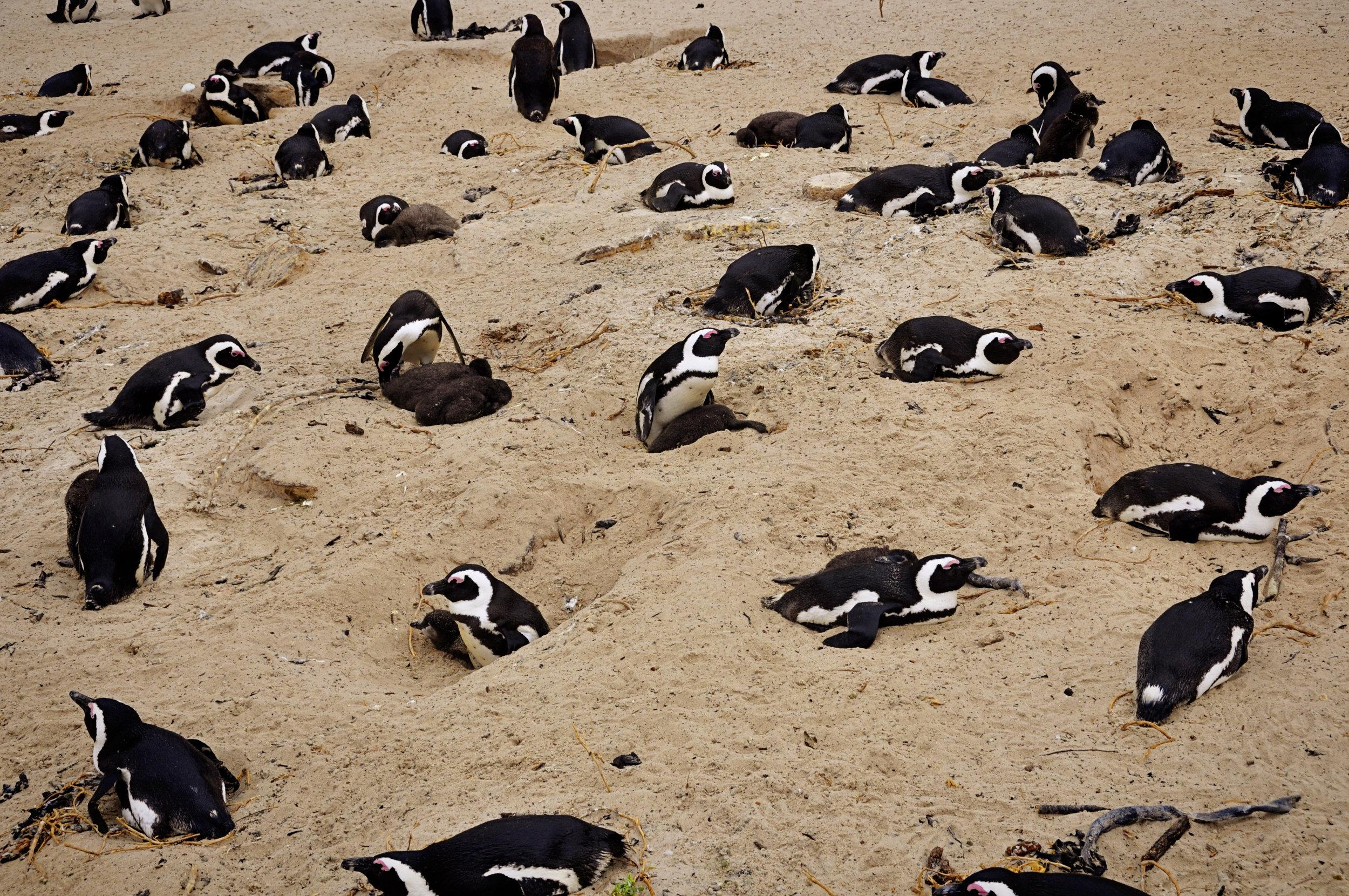 Africa - CapeTown---9.jpg