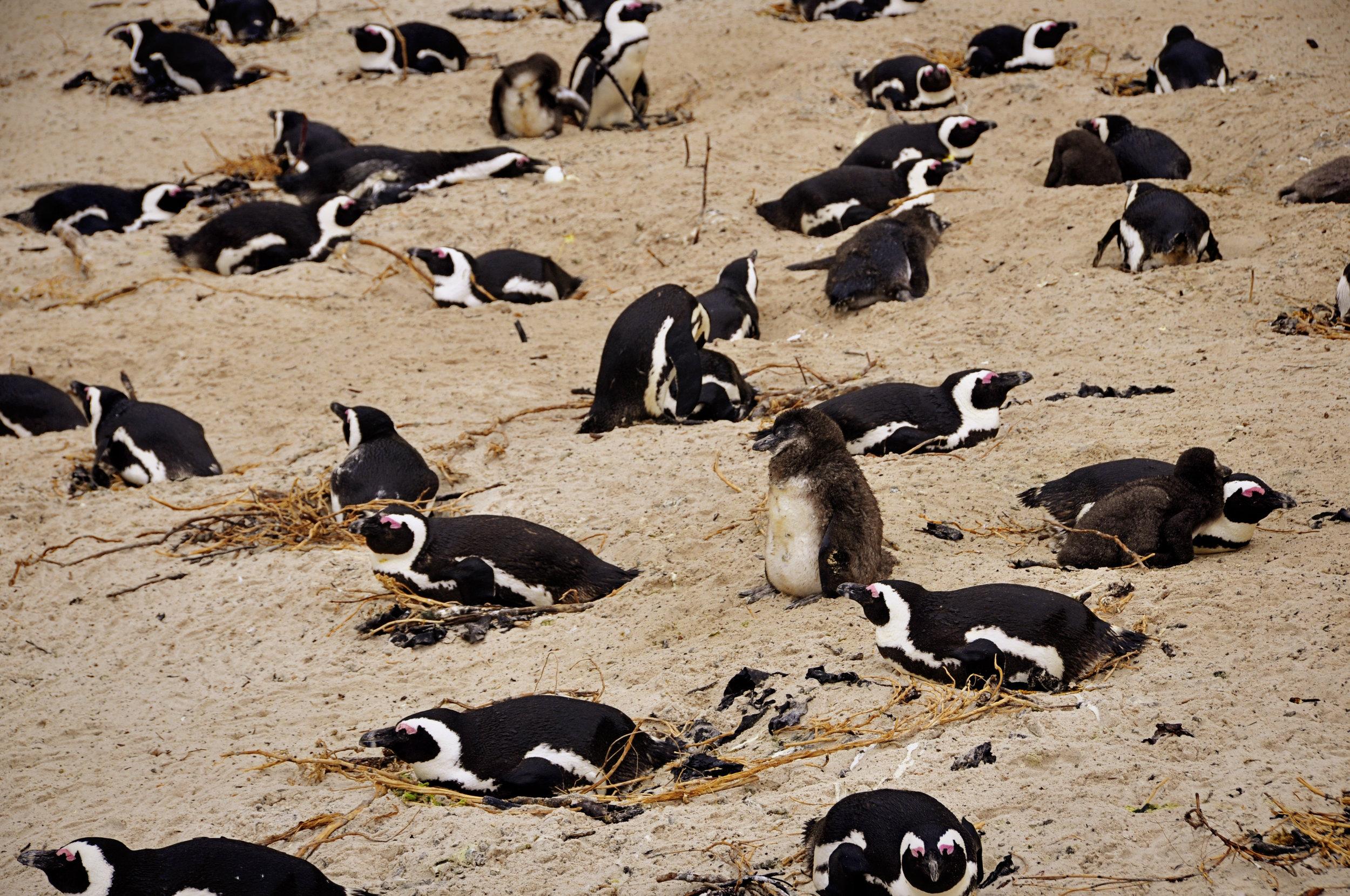 Africa - CapeTown---10.jpg