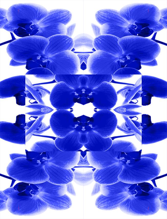 blue+orchid.jpg