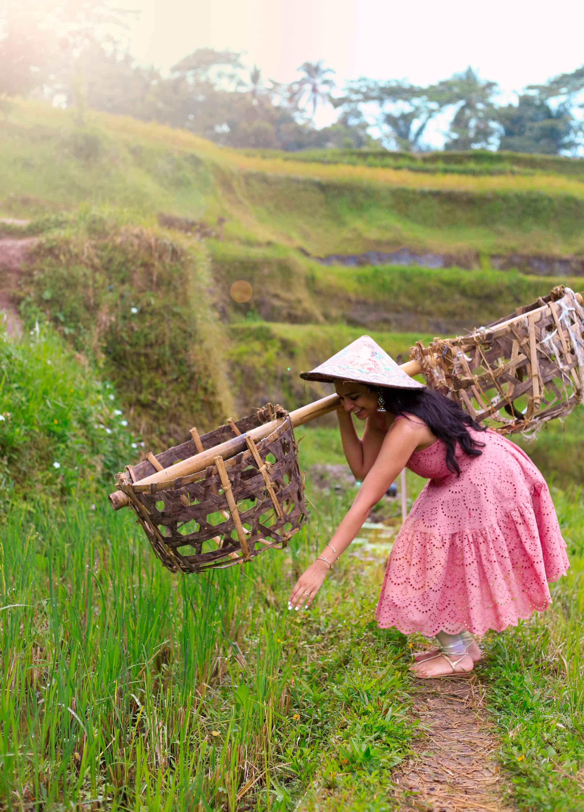 """One of the locals at the rice field let me """"harvest"""" some rice! Rice is like wheat, there are small grains at the top of the stalks that are gathered."""