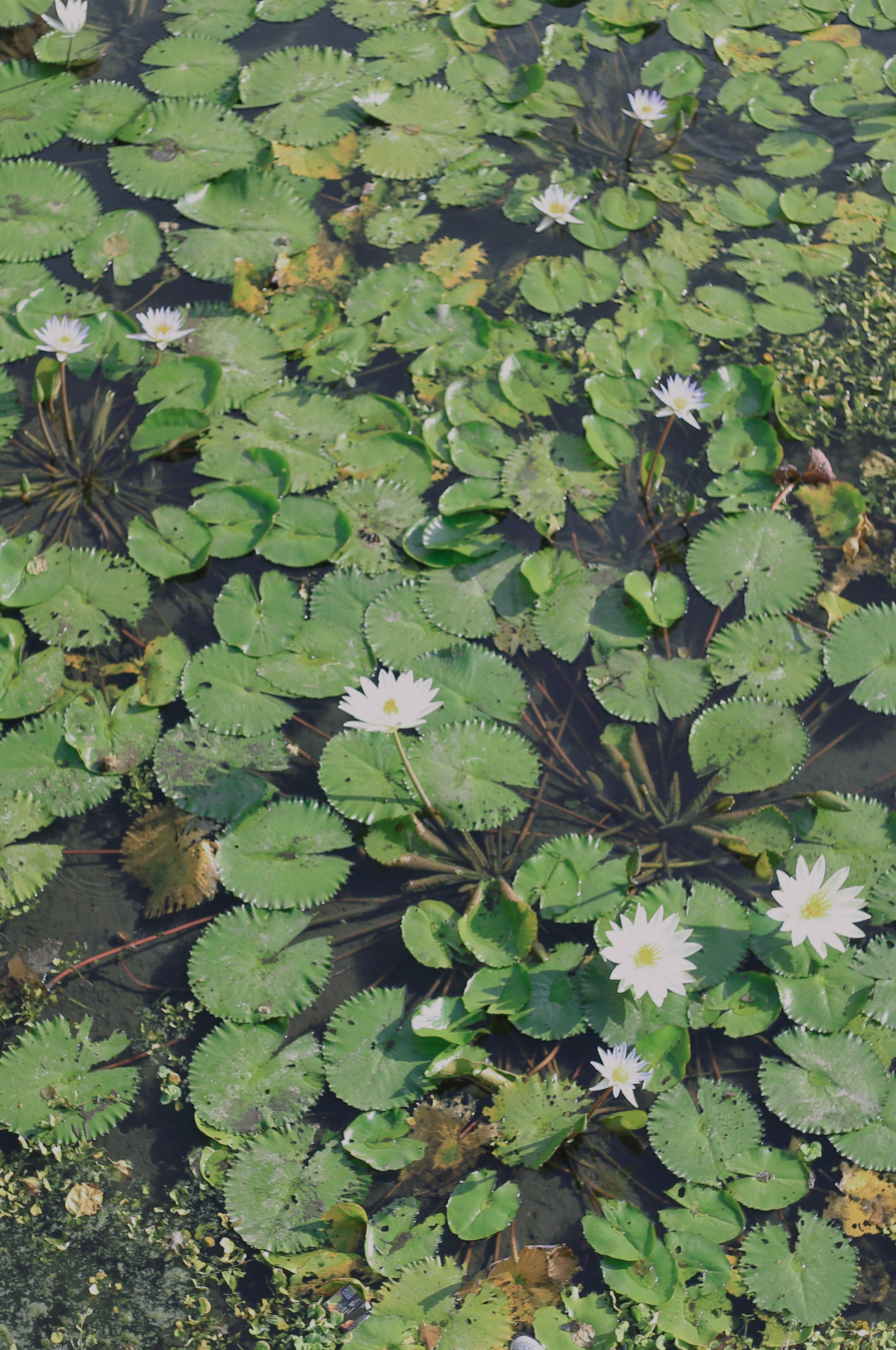 lily-pond-ew.jpg